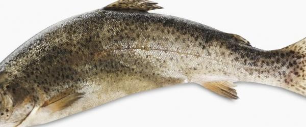 Les produits de la mer sont au SIAL Paris - Poisson